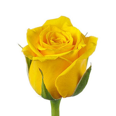 Роза желтая Пенни Лейн