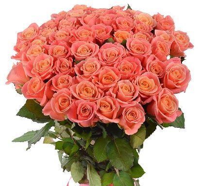Коралловая роза Вау