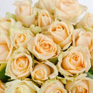 Персиковая роза 70 см 15 штук