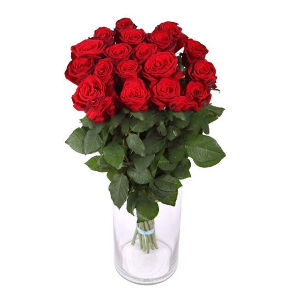 Красная роза 60 см 15 штук