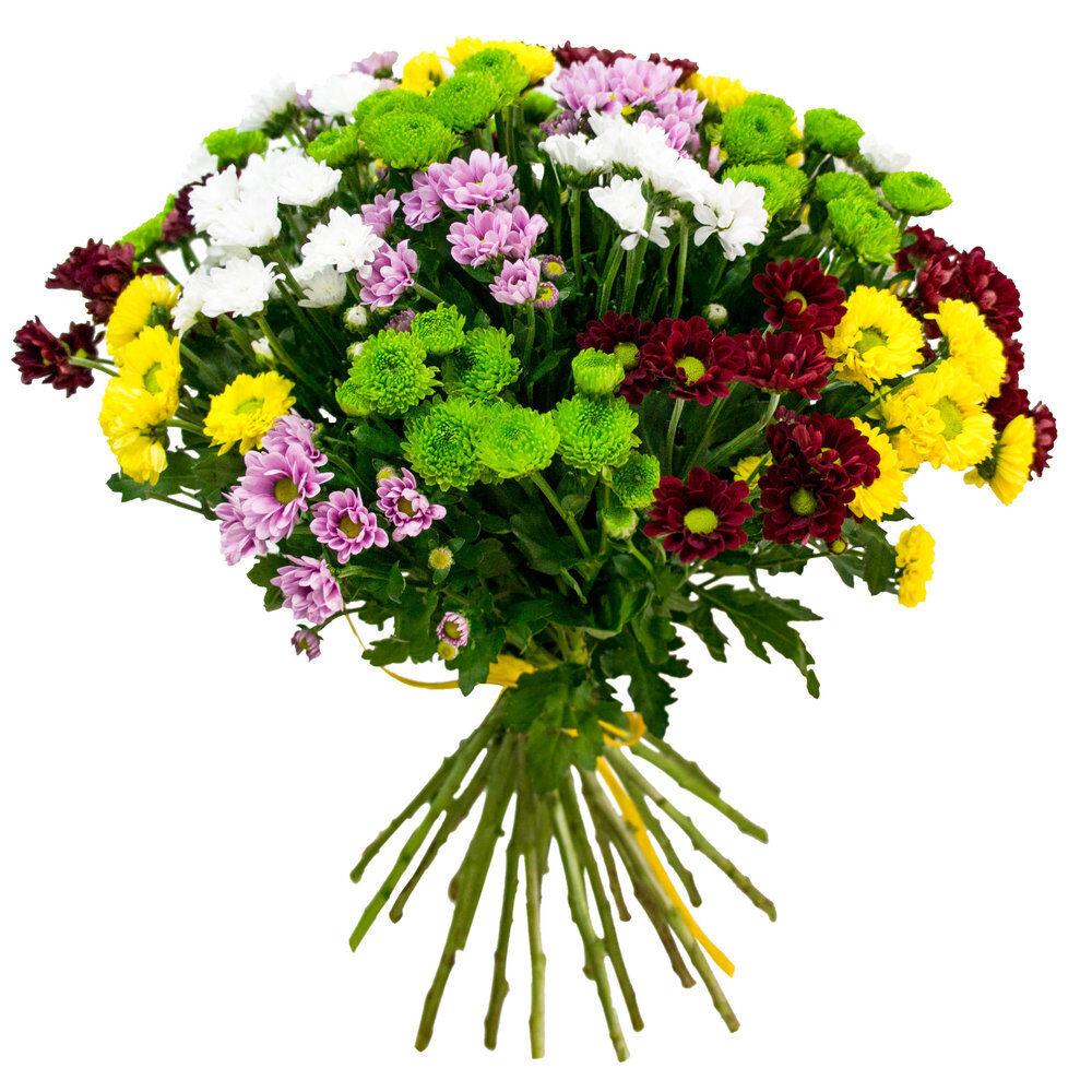 фото букет разноцветных из хризантем