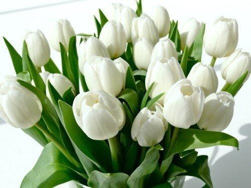 Букет 25 тюльпанов № 125