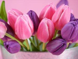 37 тюльпанов в коробке