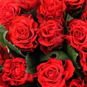 Букет 51 красная роза № 180