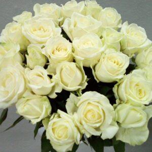 Роза белая 70 см 15шт