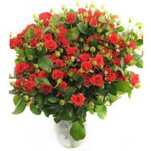 Красная спрей роза