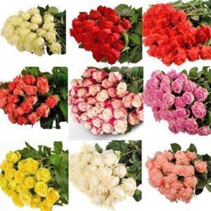 роза Эквадор 60 см - 25 шт