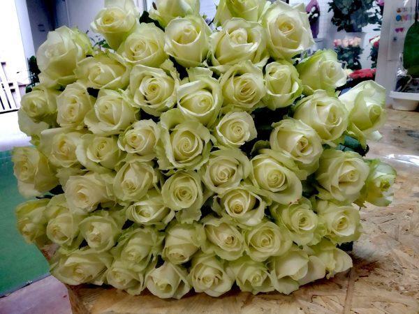 Роза белая 51 шт
