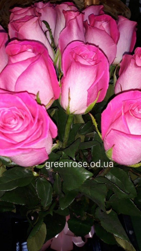 розы розовые 70 см букет 25 шт