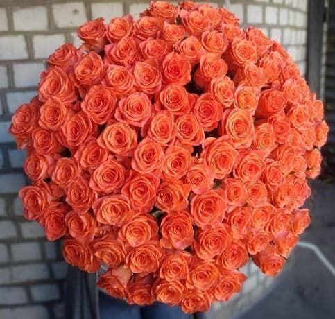 Коралловая роза Вау 101 штука